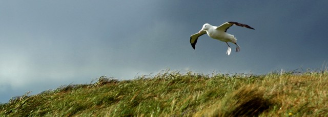 Royal Albatross Centre Wildlife Tours Dunedin